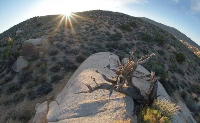 Sun-rock-tree-2