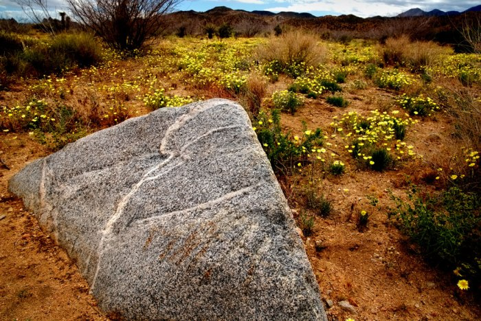 zig-rock-daisies