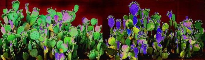 cactus-pano-paint
