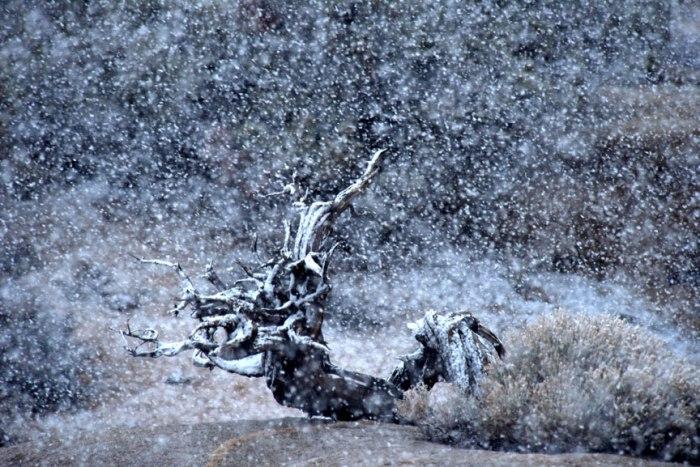 rock-tree-snow