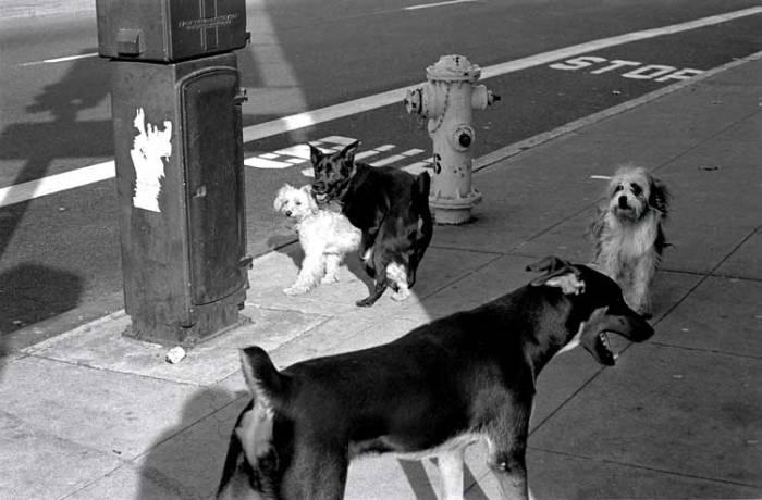 dogstyle-07-edit